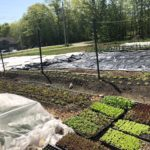 Tiny Roots Organic Farm @ 223 Pine Tree Rd. LItchfield ME